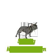 Csipkebogyó por adagolás kis méretű kutyáknak
